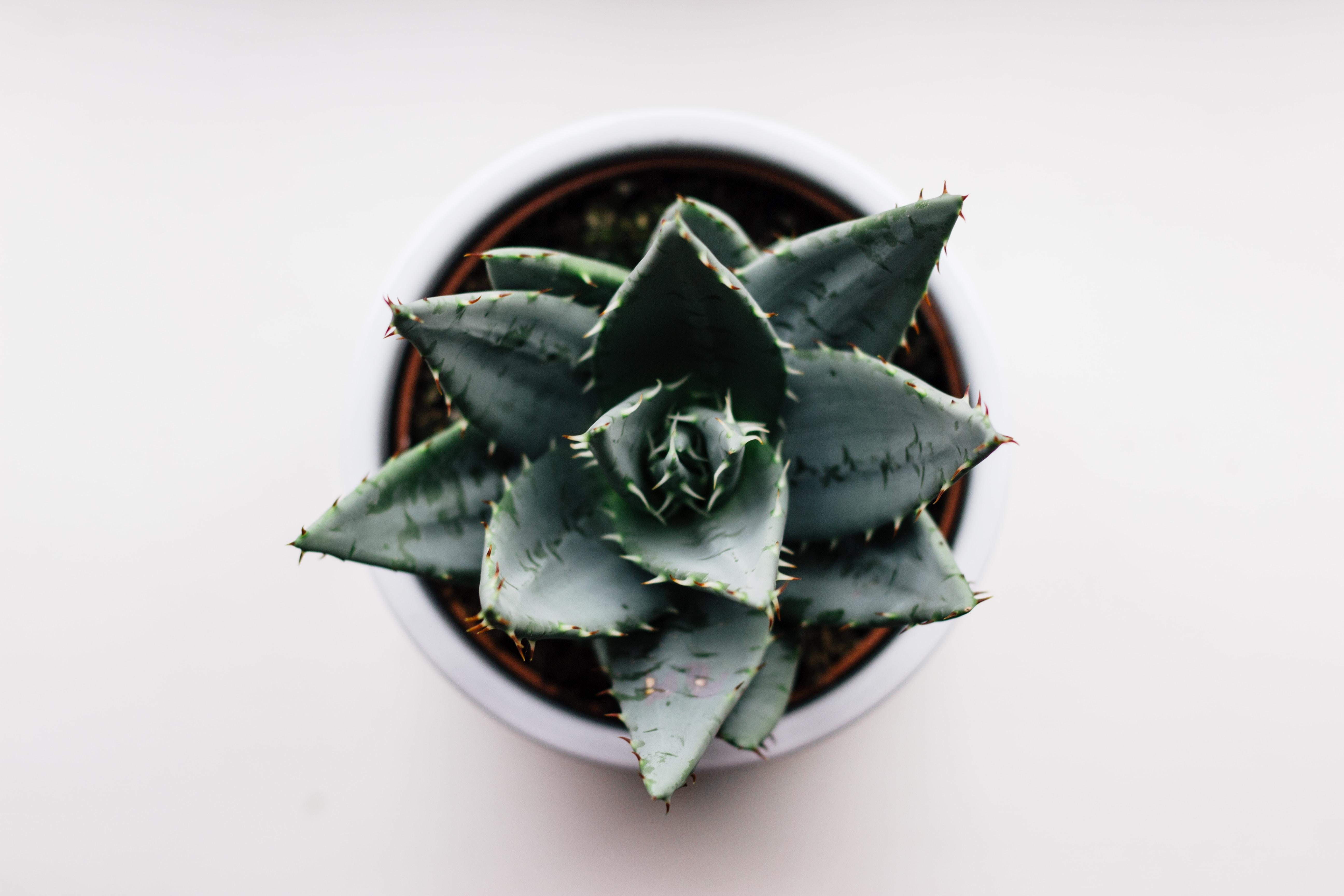 green cactus on brown pot