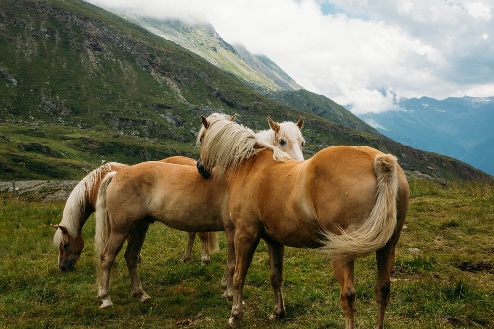 herd of horse on green field under clouds