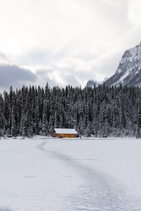 cabin in the middle of forest covered by snow