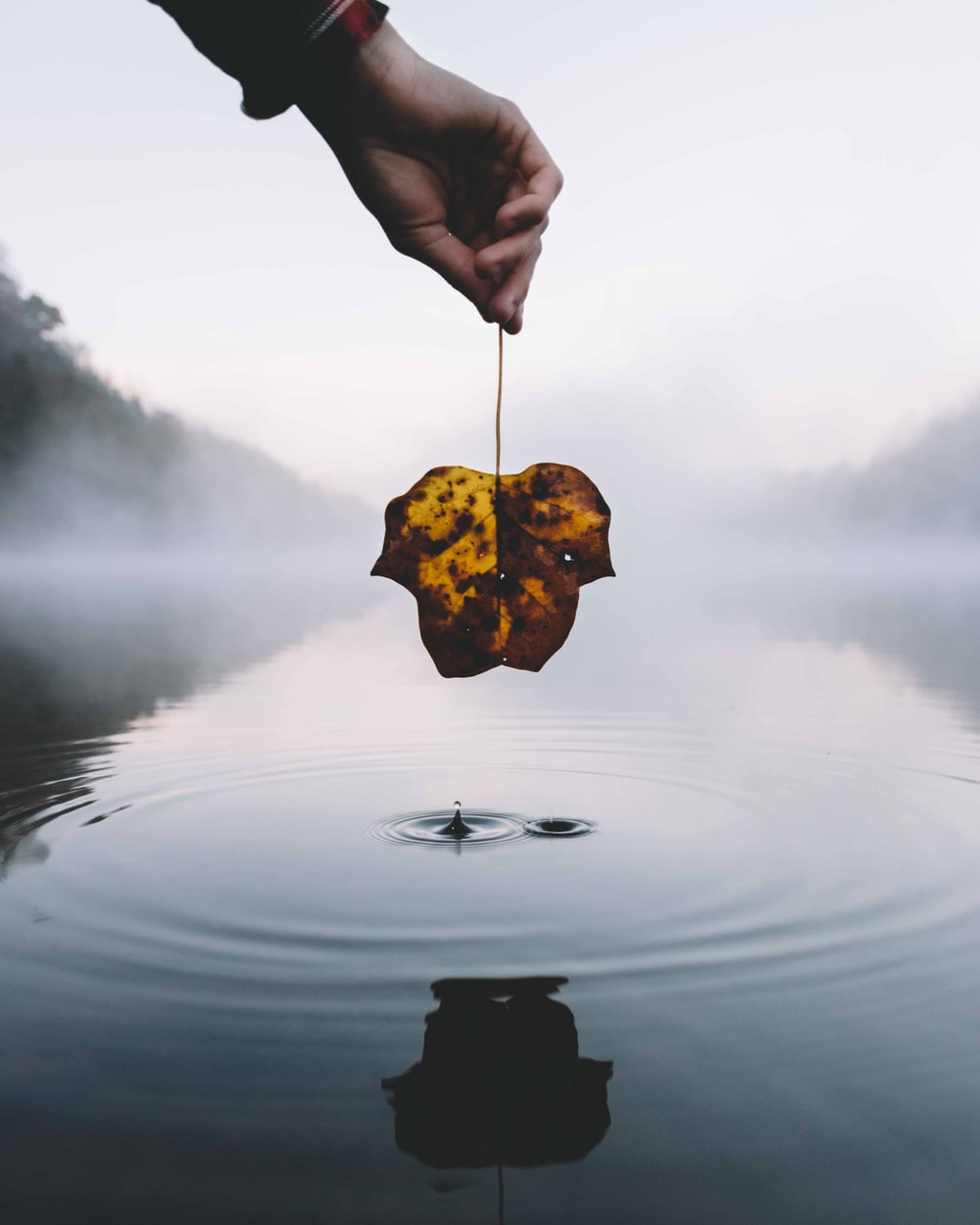 person holding withered leaf above body of water