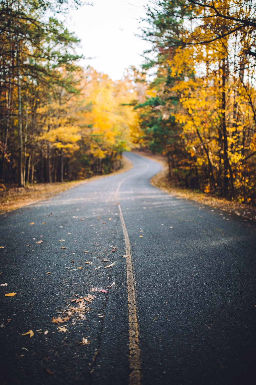 asphalt road between yellow leaf trees during daytime