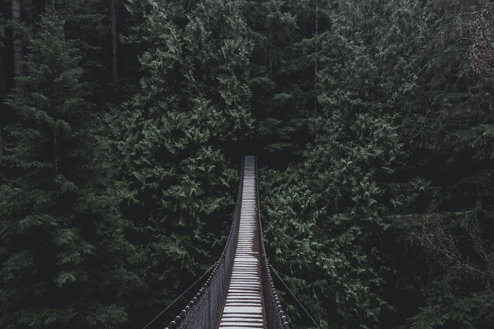 hanging bridge on forest