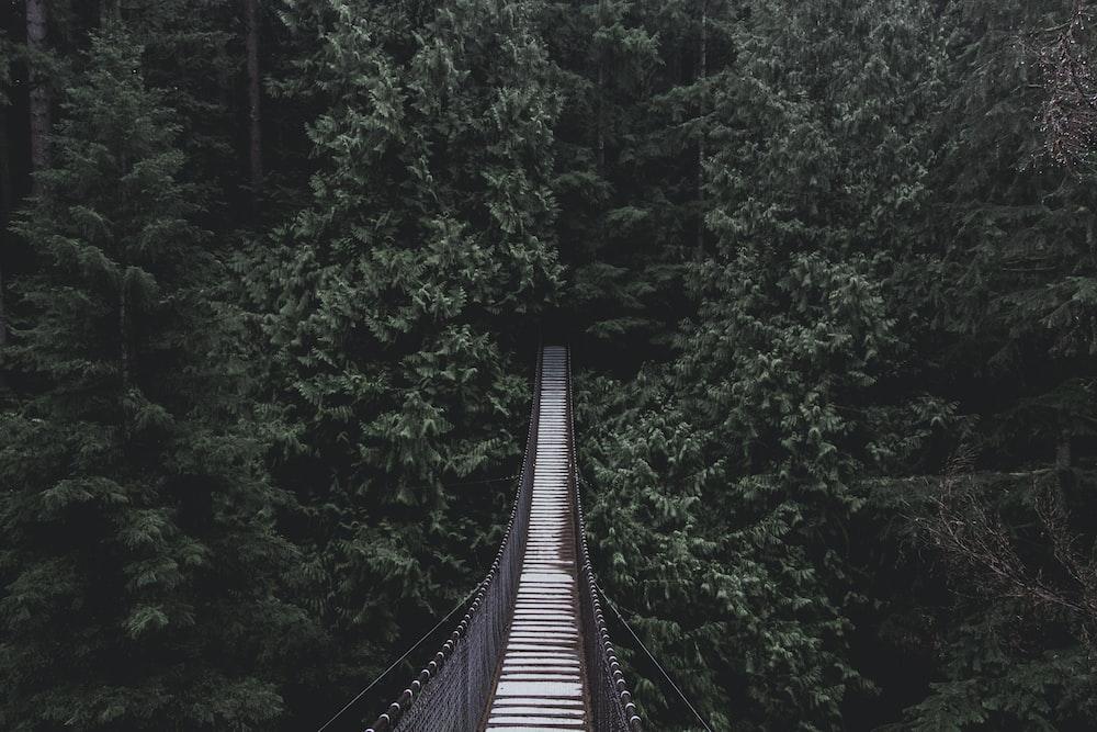 hanging bridge on forest