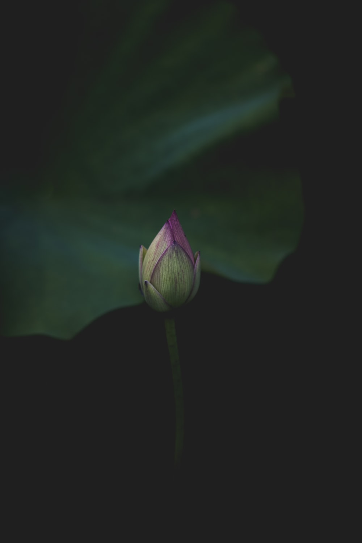Bud flower plant and stem hd photo by claire brear bearista1 purple flower izmirmasajfo
