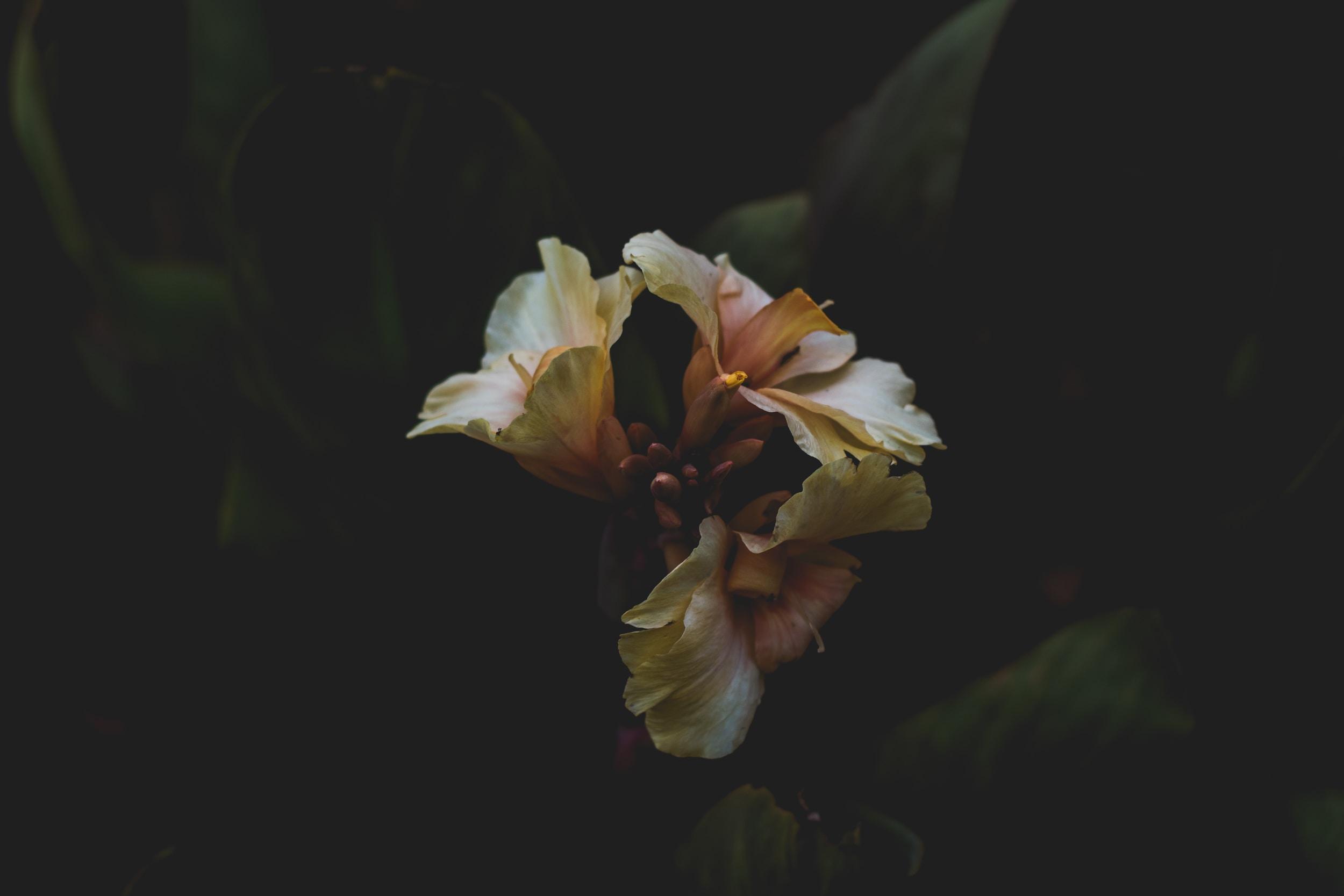 beige flower macro photography