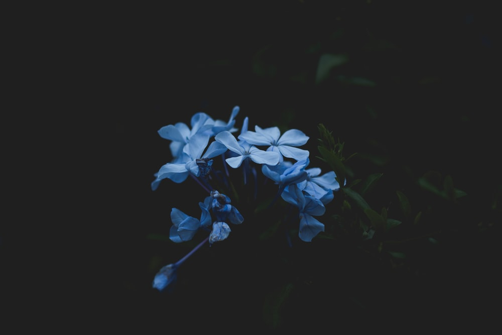 black background with white flowe