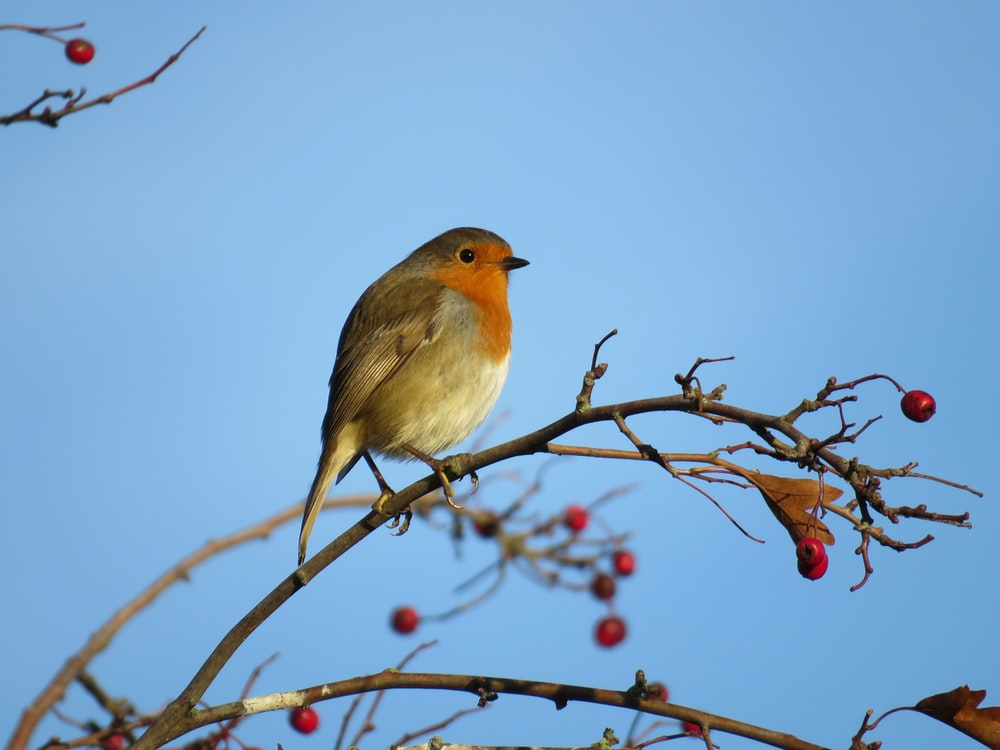bird perched on tree branch during day