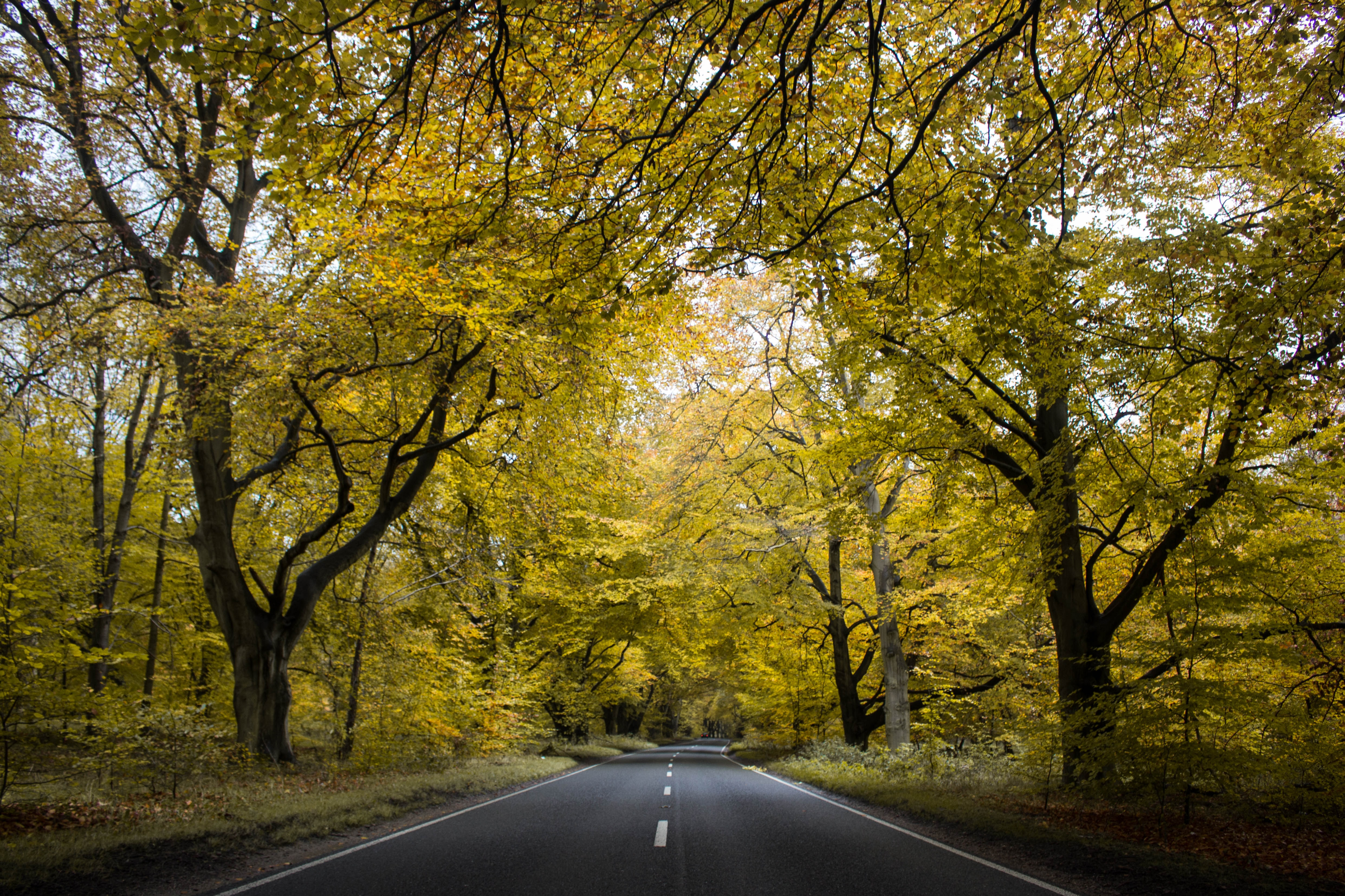 road between green tress