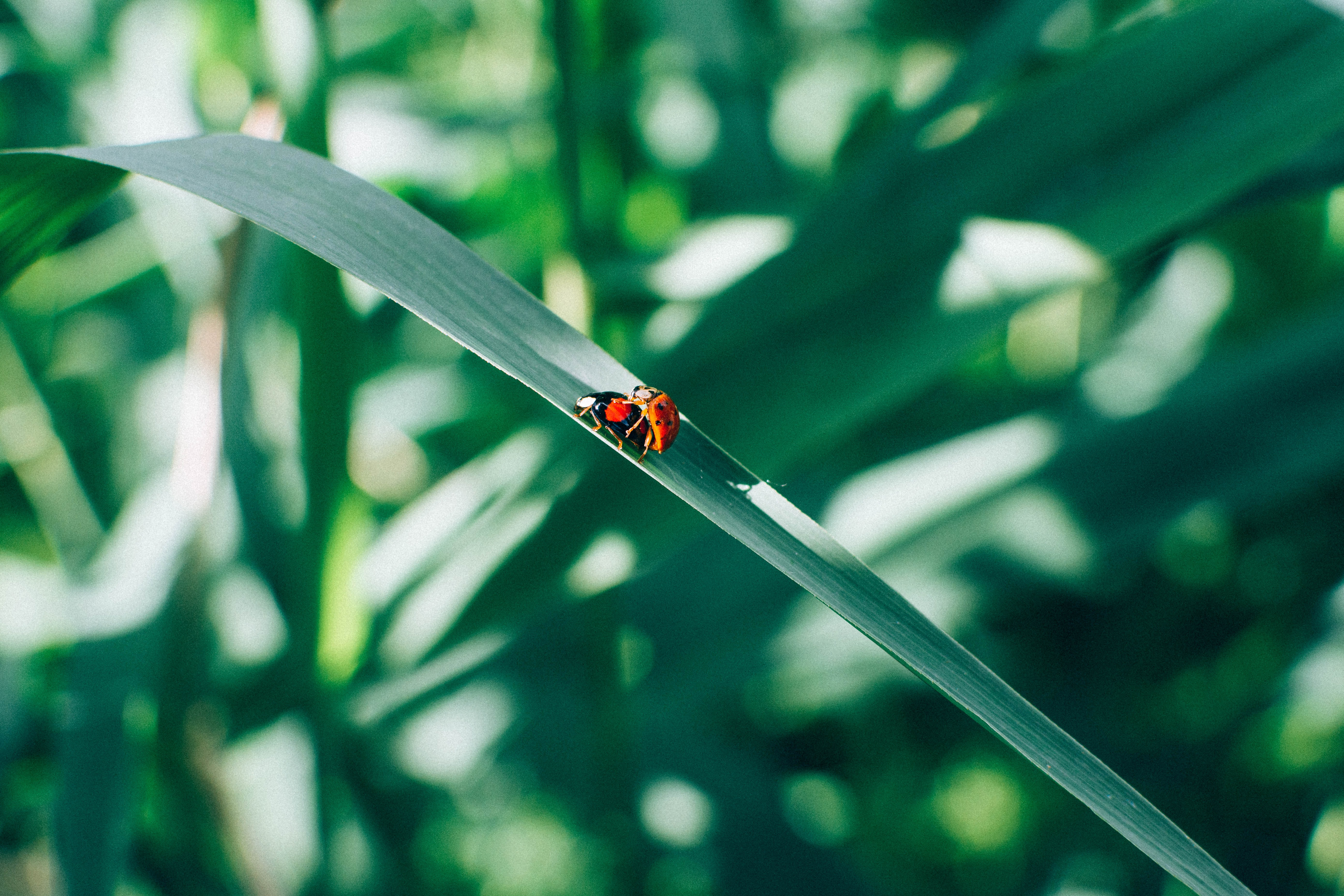 two red lady bugs