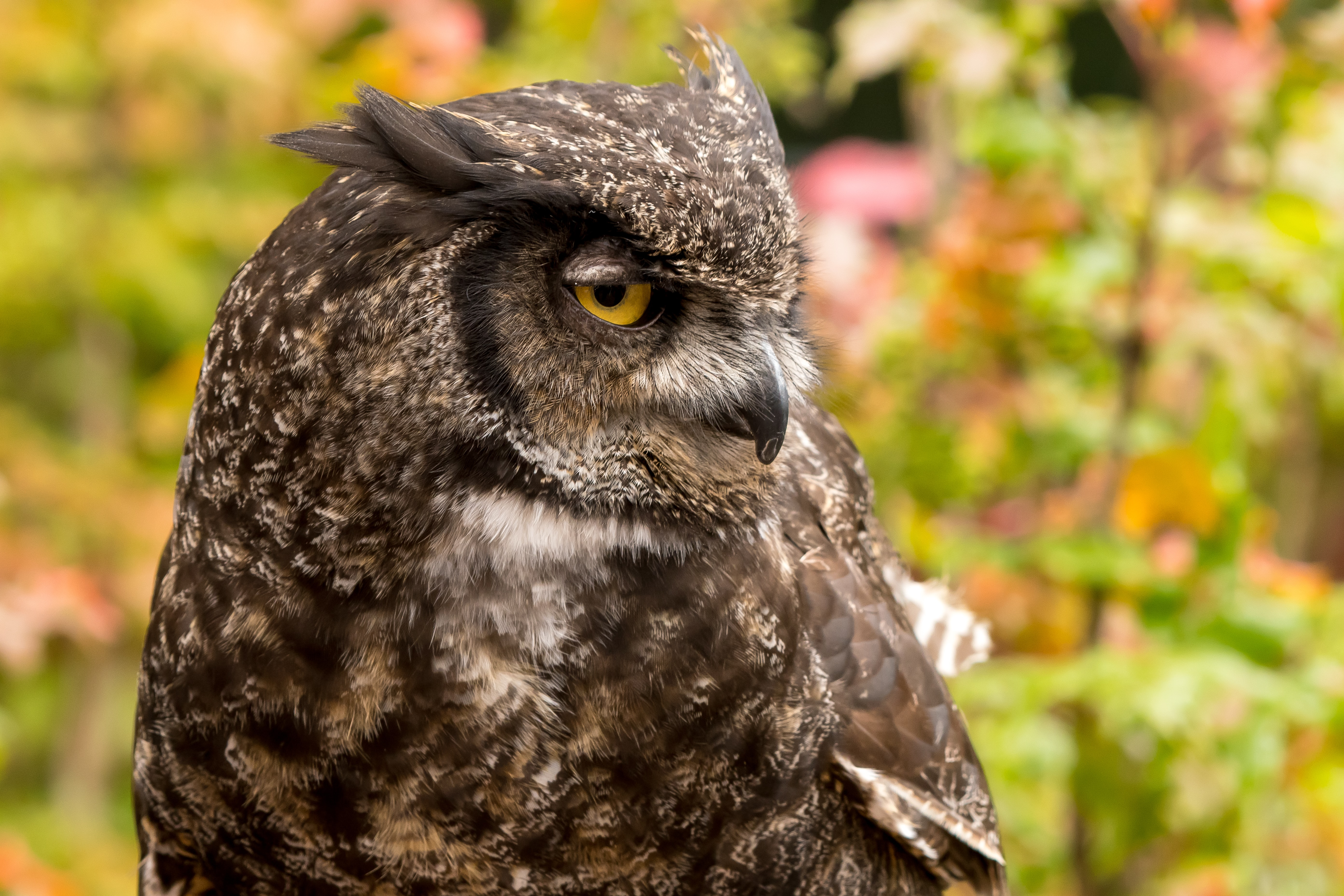 selective focus of owl