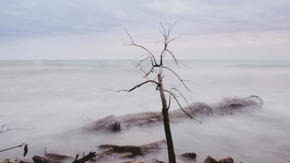 bare tree near rock with clouds