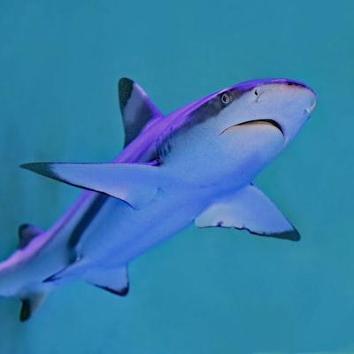 photo of gray and white shark