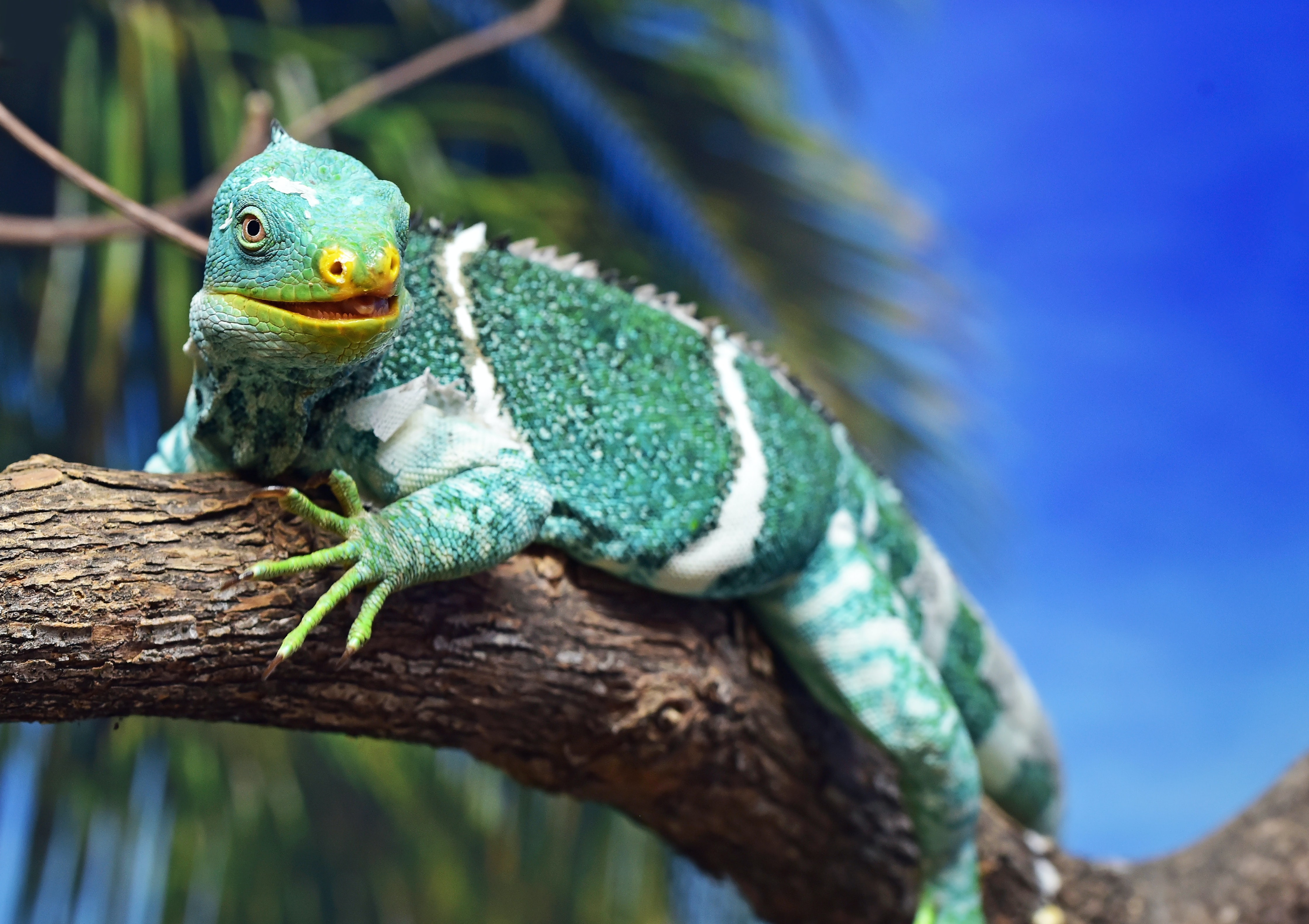 green and white reptile on wood branch