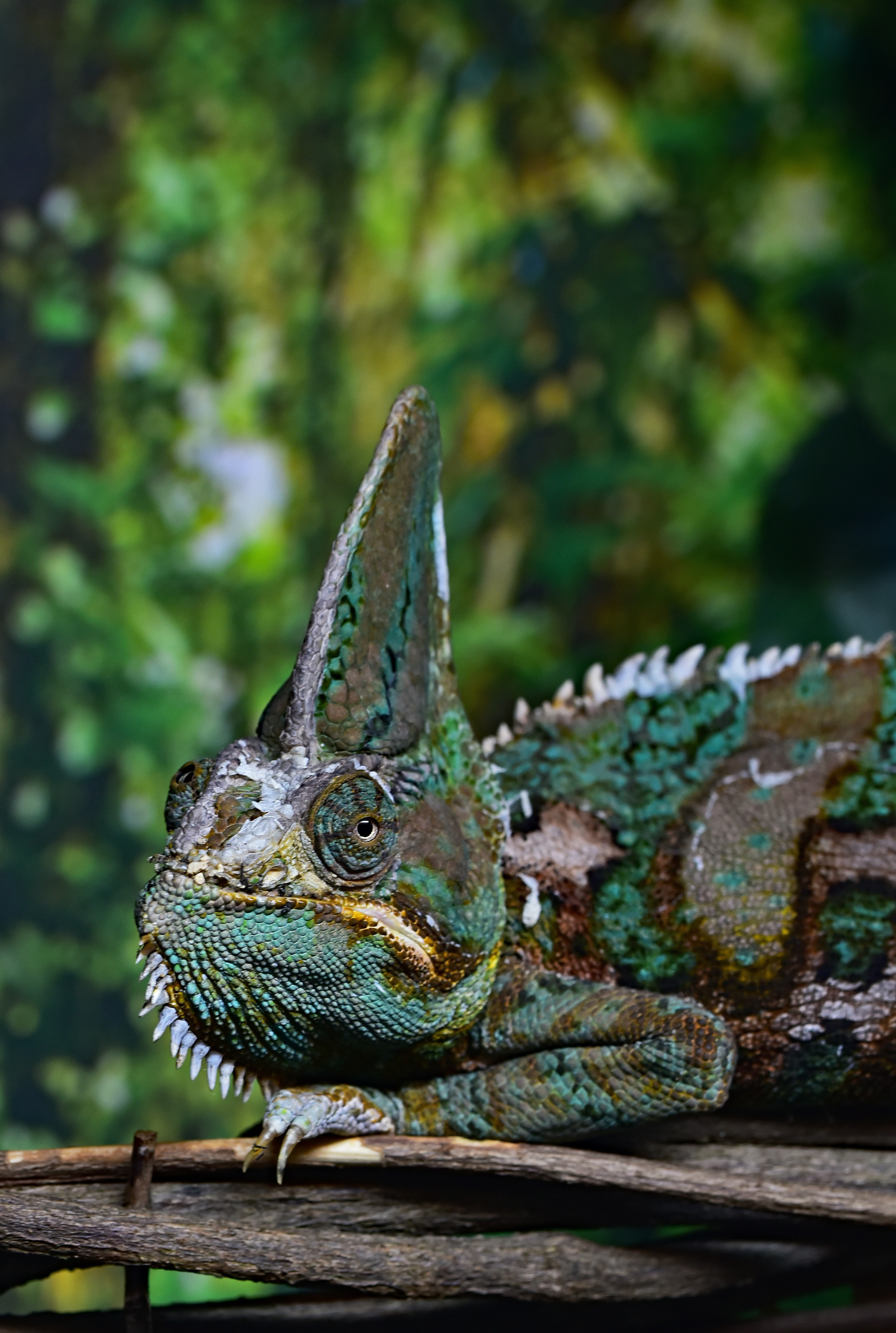 closeup photography of chameleon on tree branch