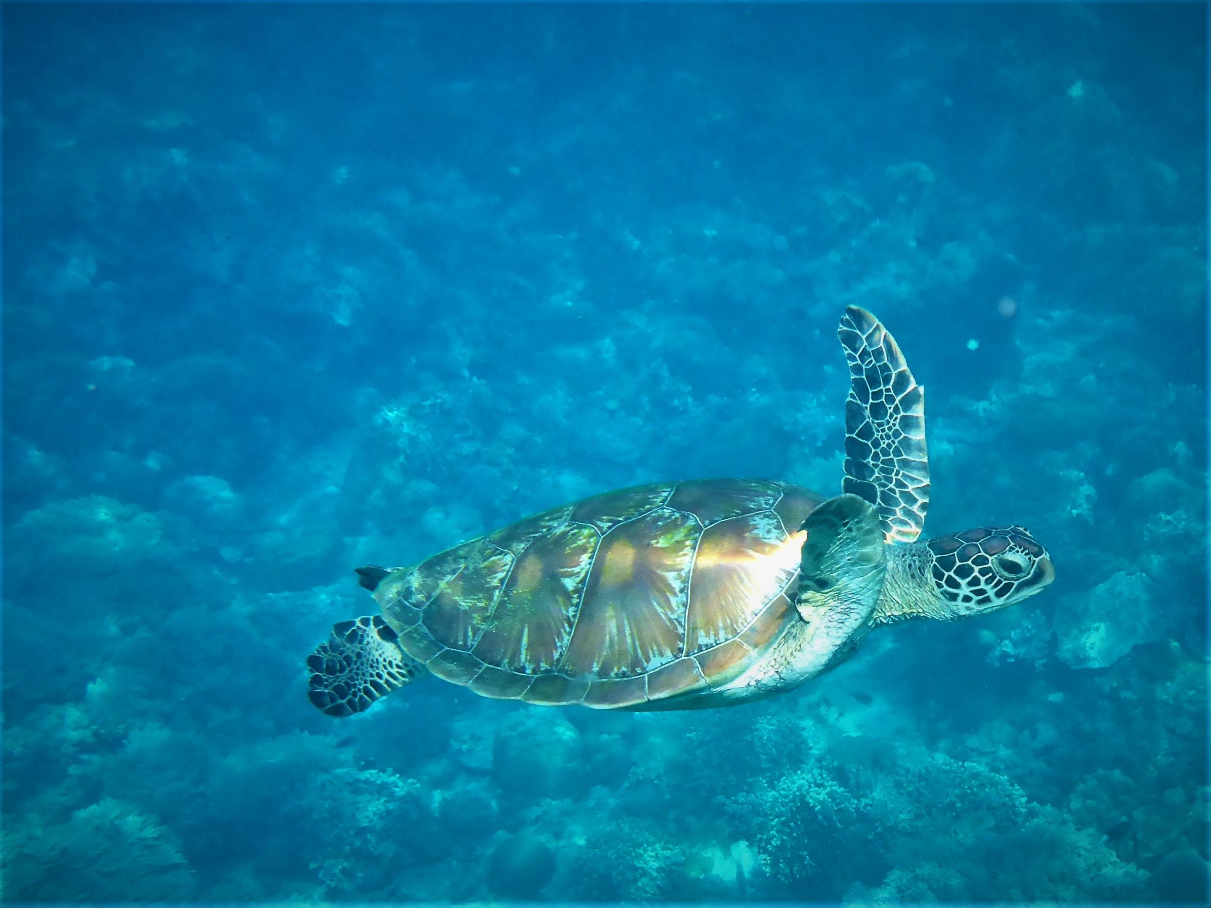 tortoise of water