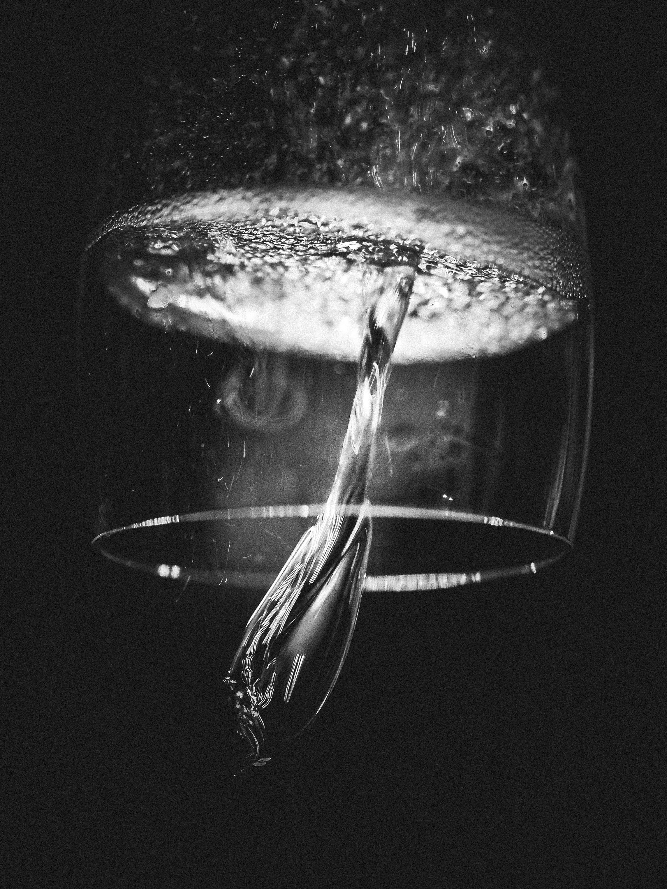 grayscale photo of jelly fish