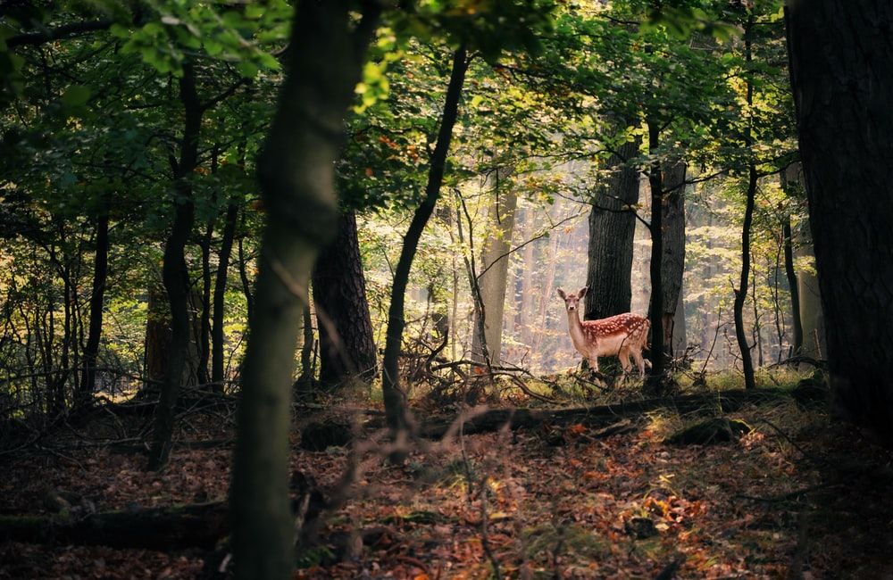 brown reindeer in forest during daytime