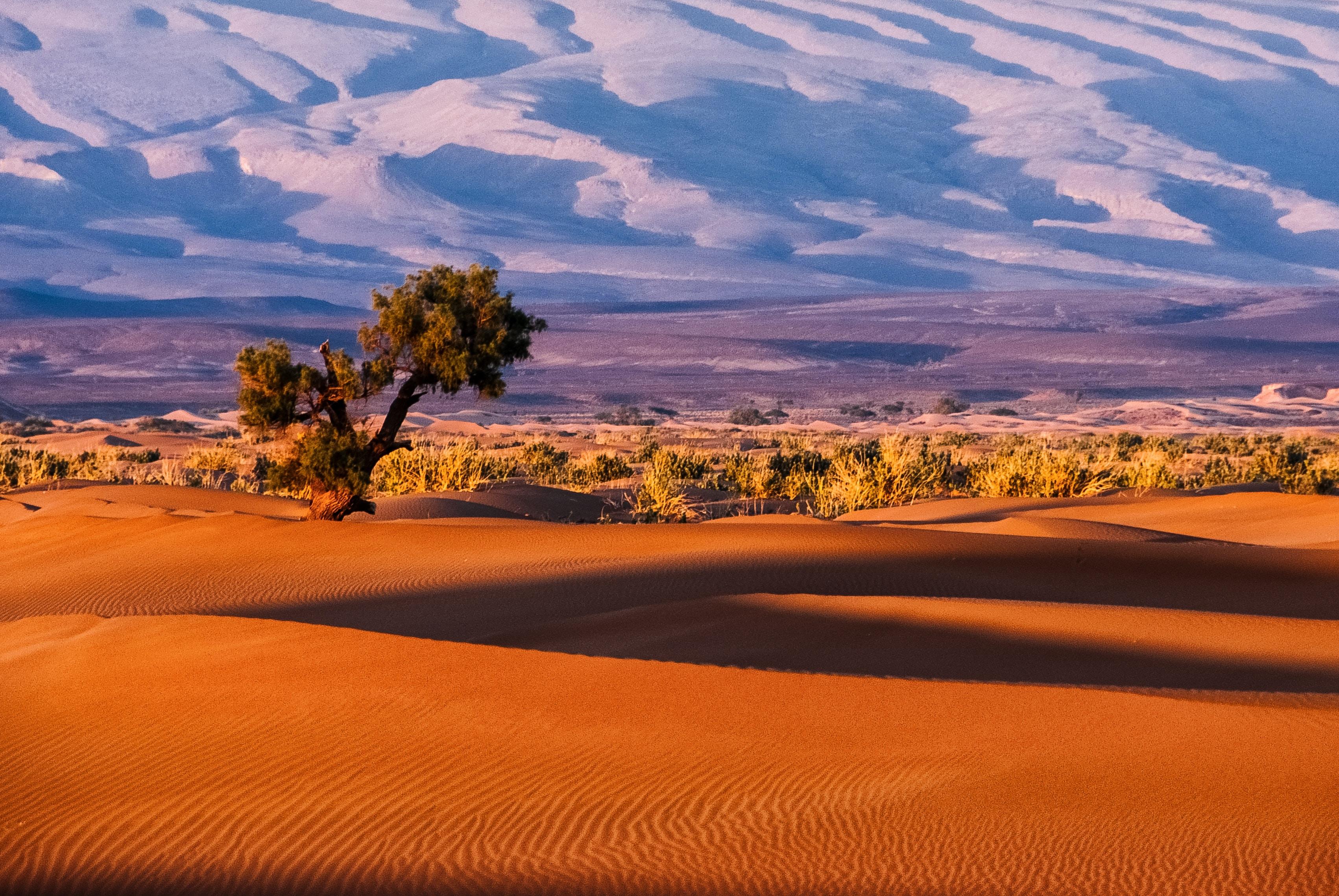 tree in a desert field