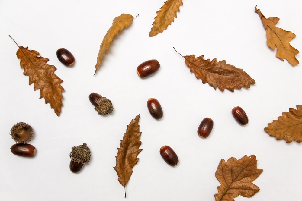 brown leaves and nuts