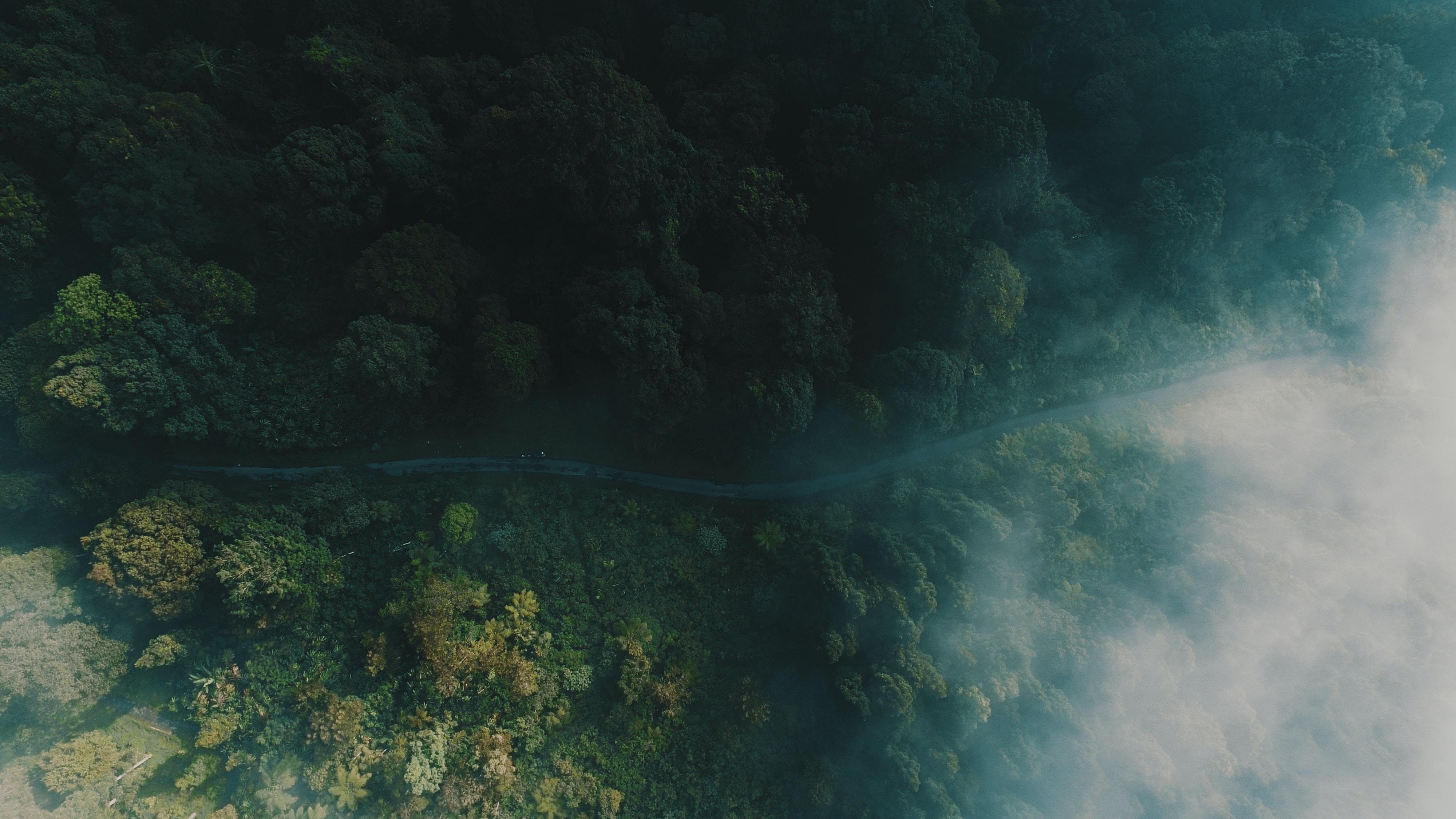 aerial photo of jungle