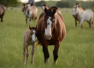 mother horse and young horse together on grass during daytime