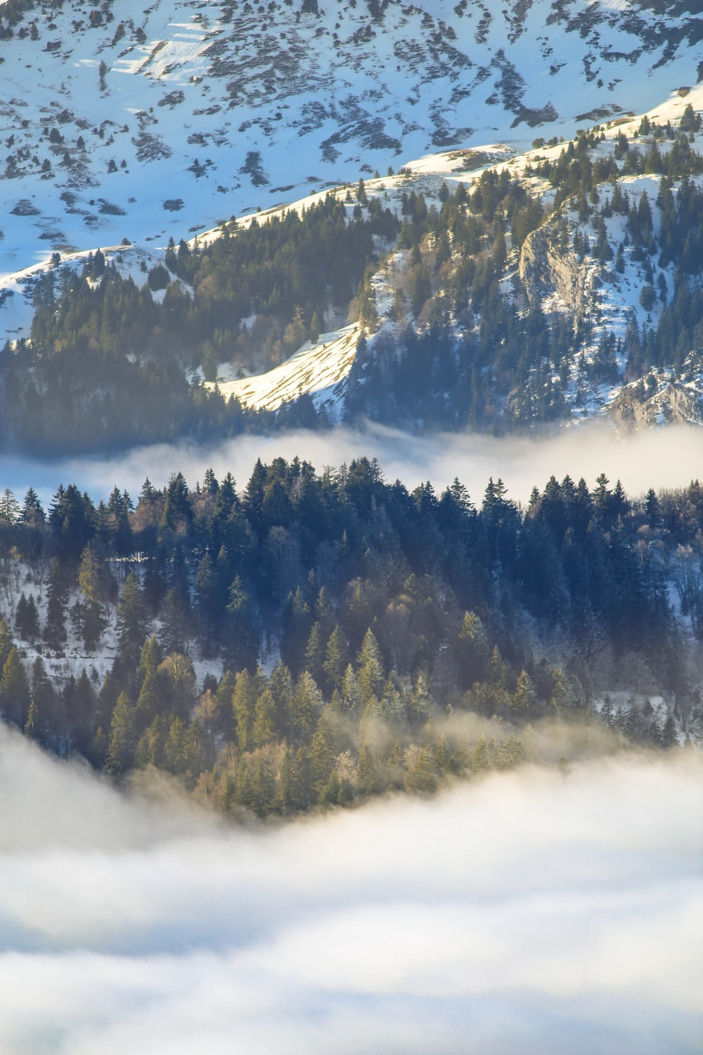 aerial photography of evergreen trees surrounded by snow and white clouds