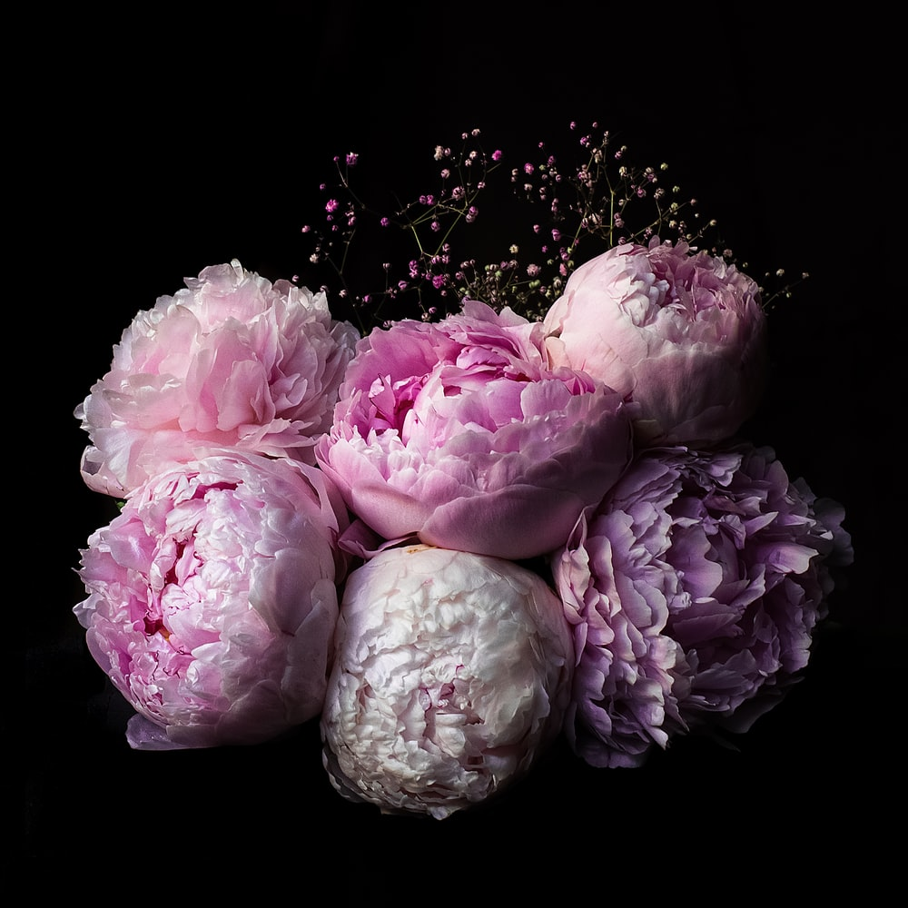 macro photo of flowers