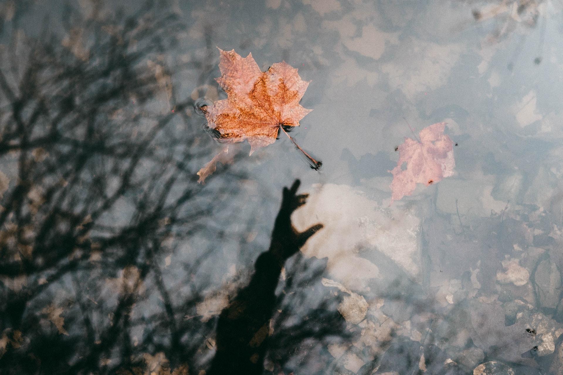 maple leaf floating on air