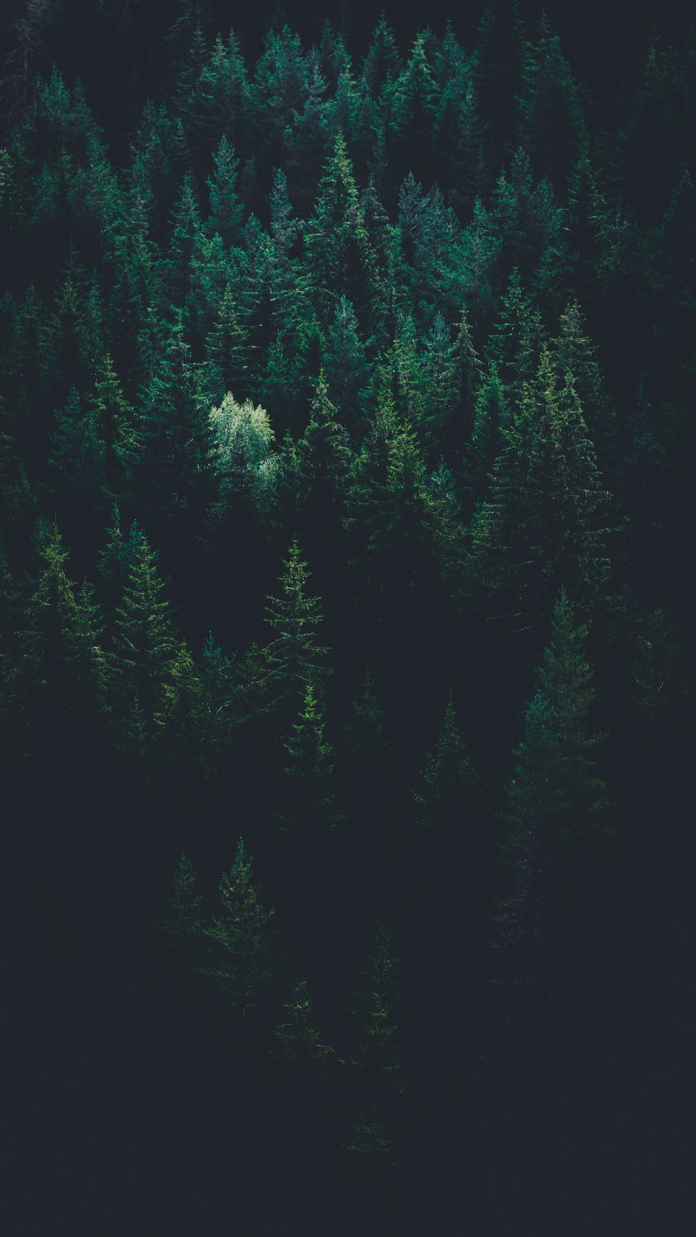 scenery of forest trees