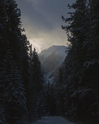 green pine trees with snow during daytime