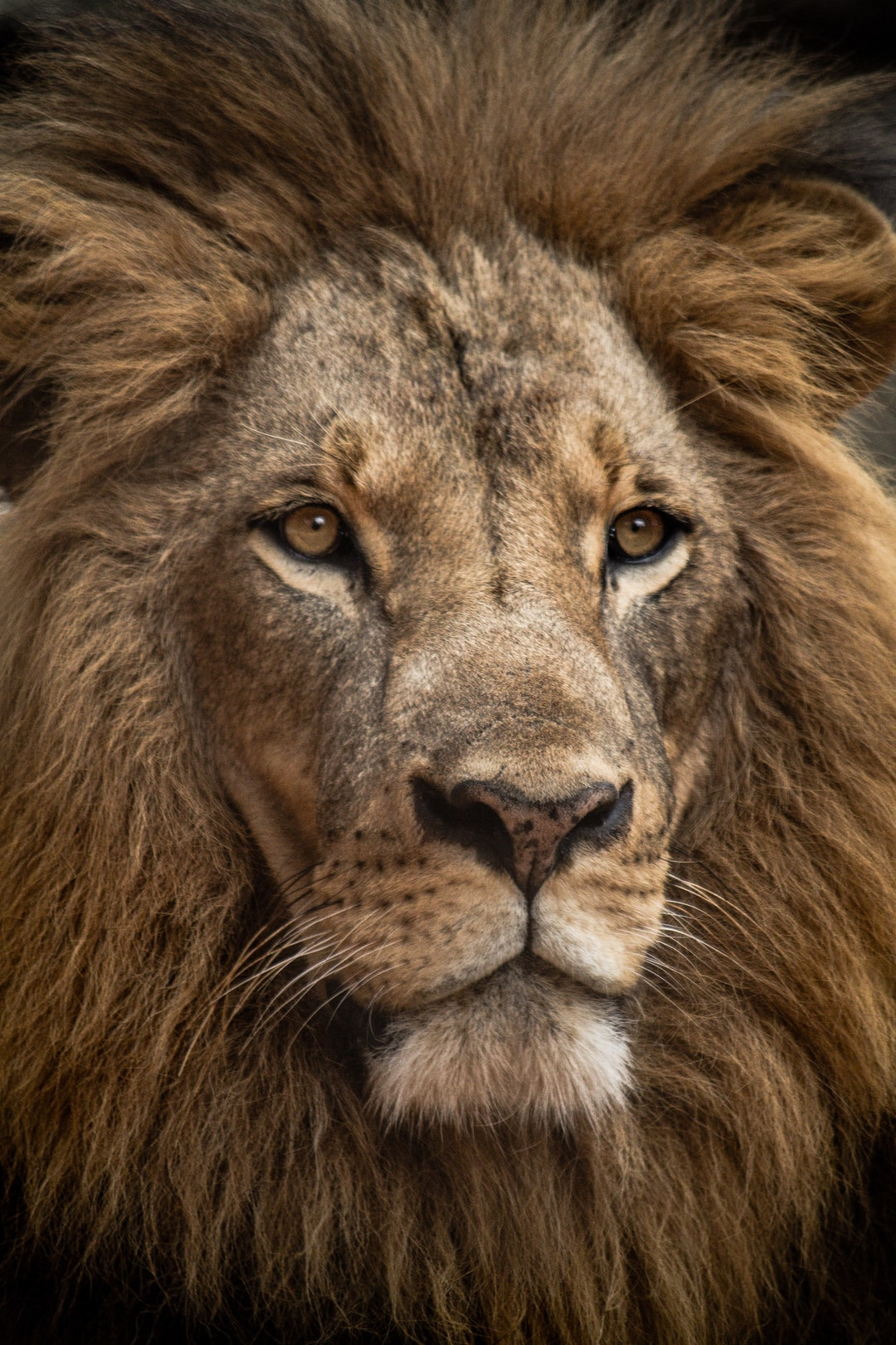 Staring at a lion through the camera with a zoom lens is quite a powerful experience. I got to photograph this stunning lion at the Nairobi Animal Orphanage outside of Nariobi National Park