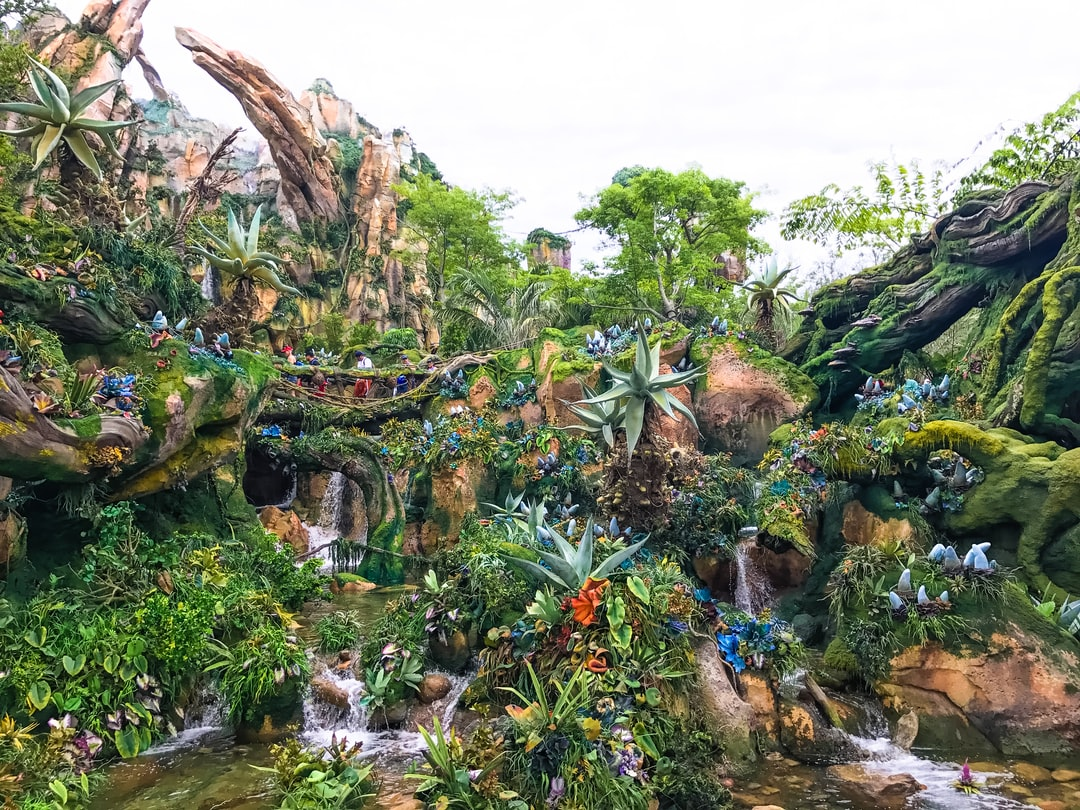 One of the many stunning views from the world of Avatar in Disney's Animal Kingdom. It truly feels like you're on a different planet.