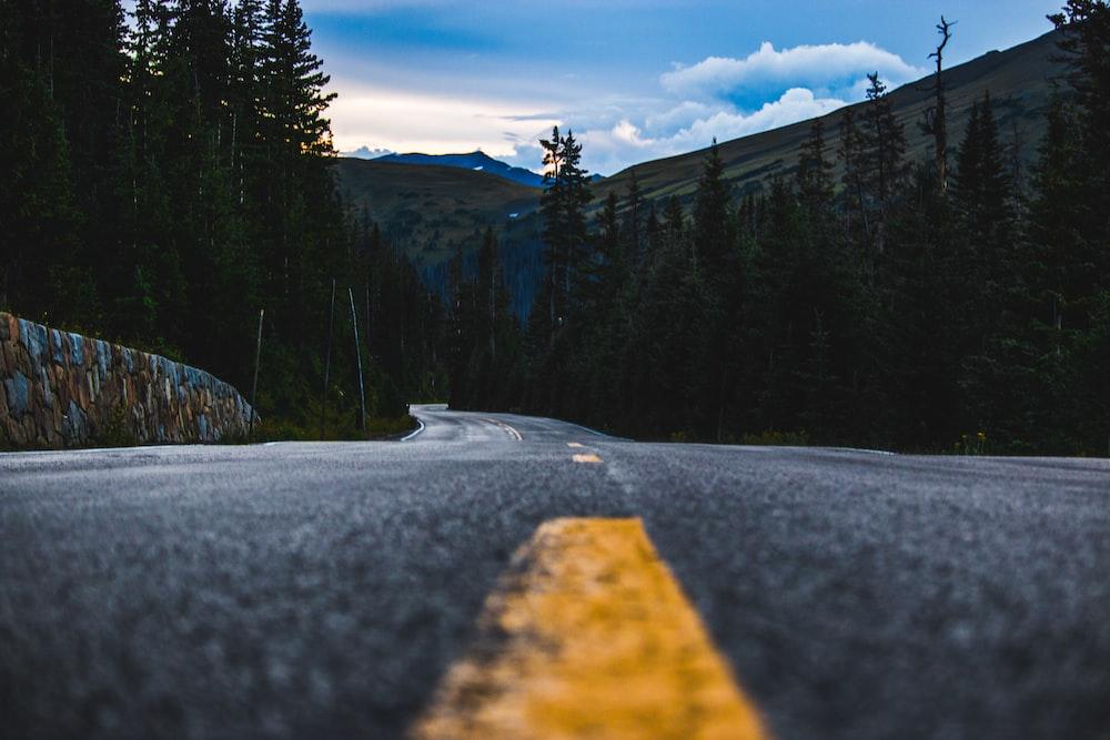 asphalt road between pine trees under cloudy blue sky