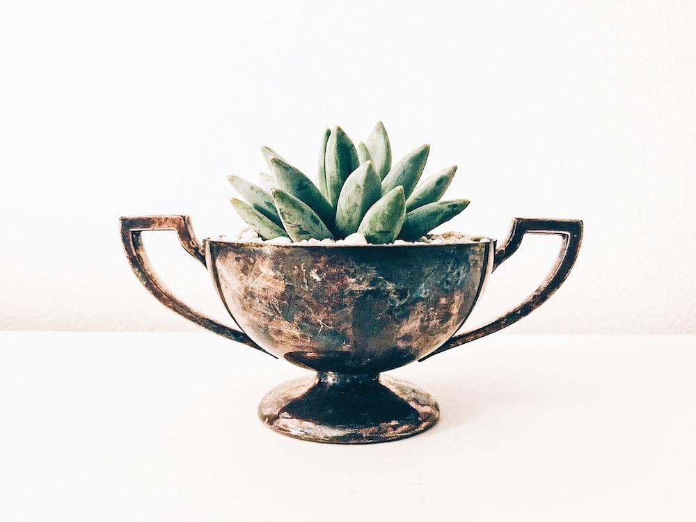 green plant in blue and white ceramic mug
