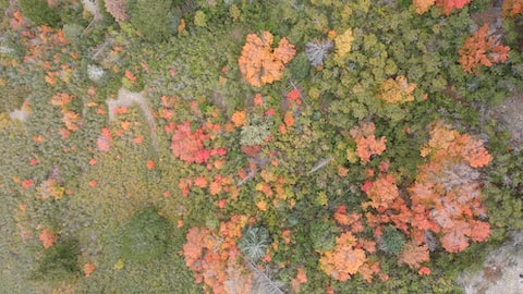 Top-down aerial view of a forest in Provo Canyon, UT