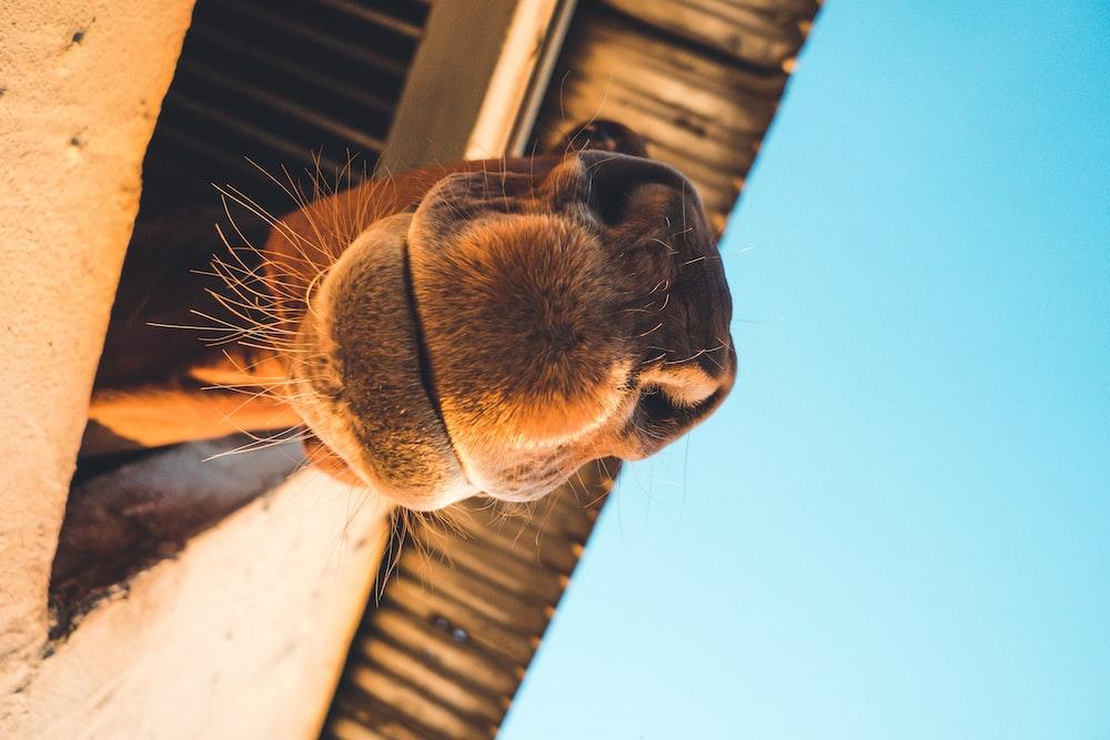 closeup photography of brown camel