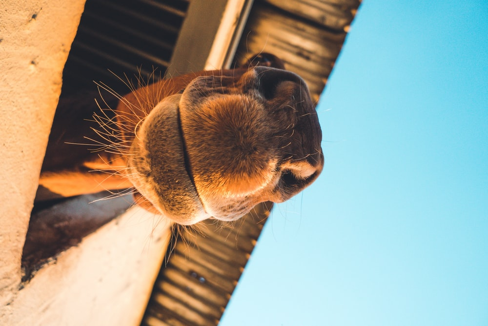 closeup photography of brown camel
