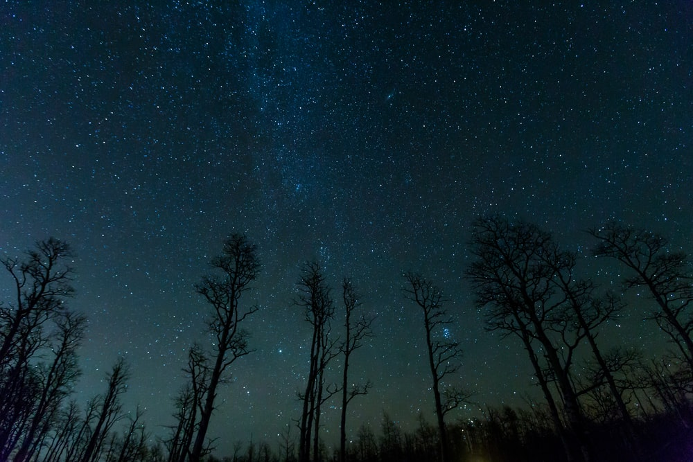 low angle photo of trees under constellation