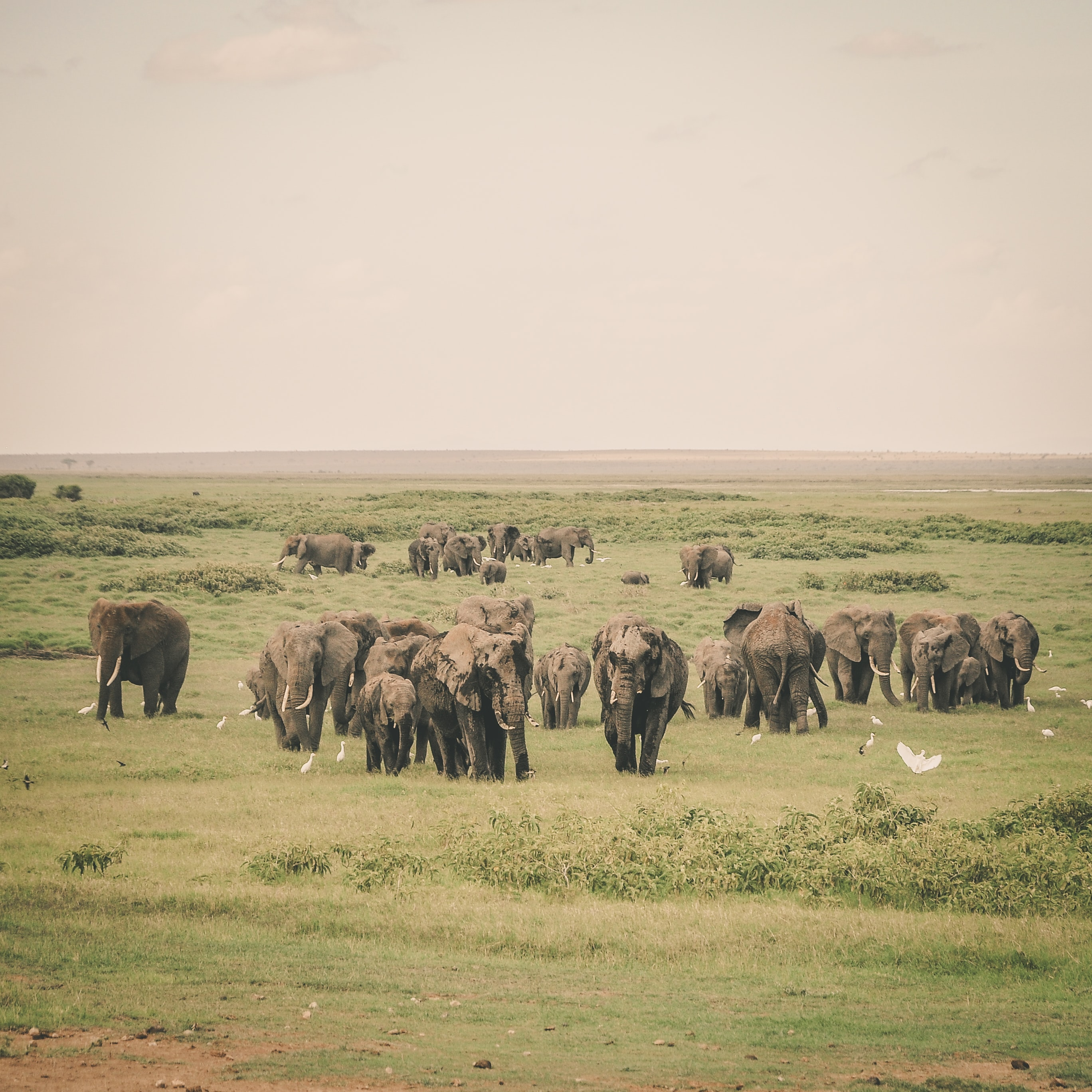 group of elephant in jungle