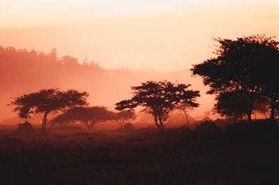 landscape of trees and mountain rwanda zoom background
