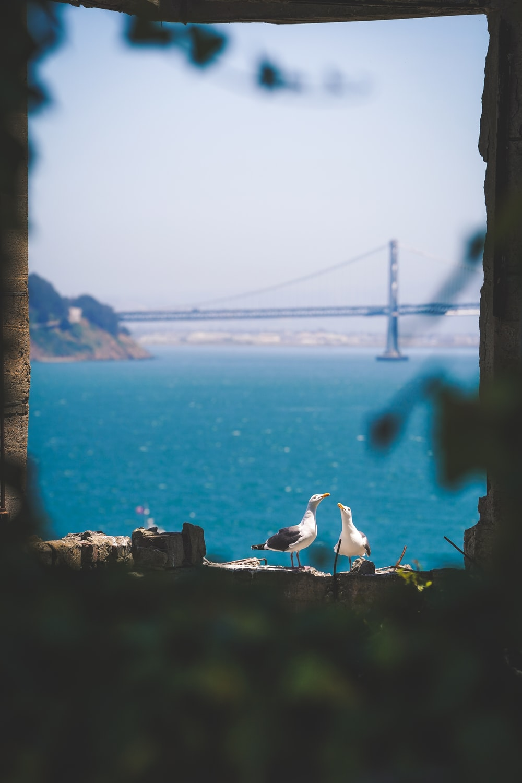 two gulls near sea