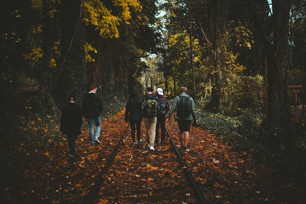 six person walking on train rail surrounded by tall trees at daytime