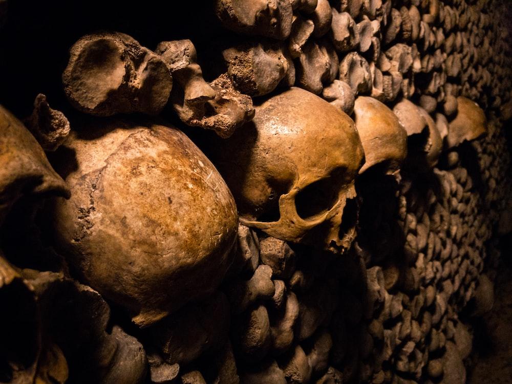 skeleton skulls