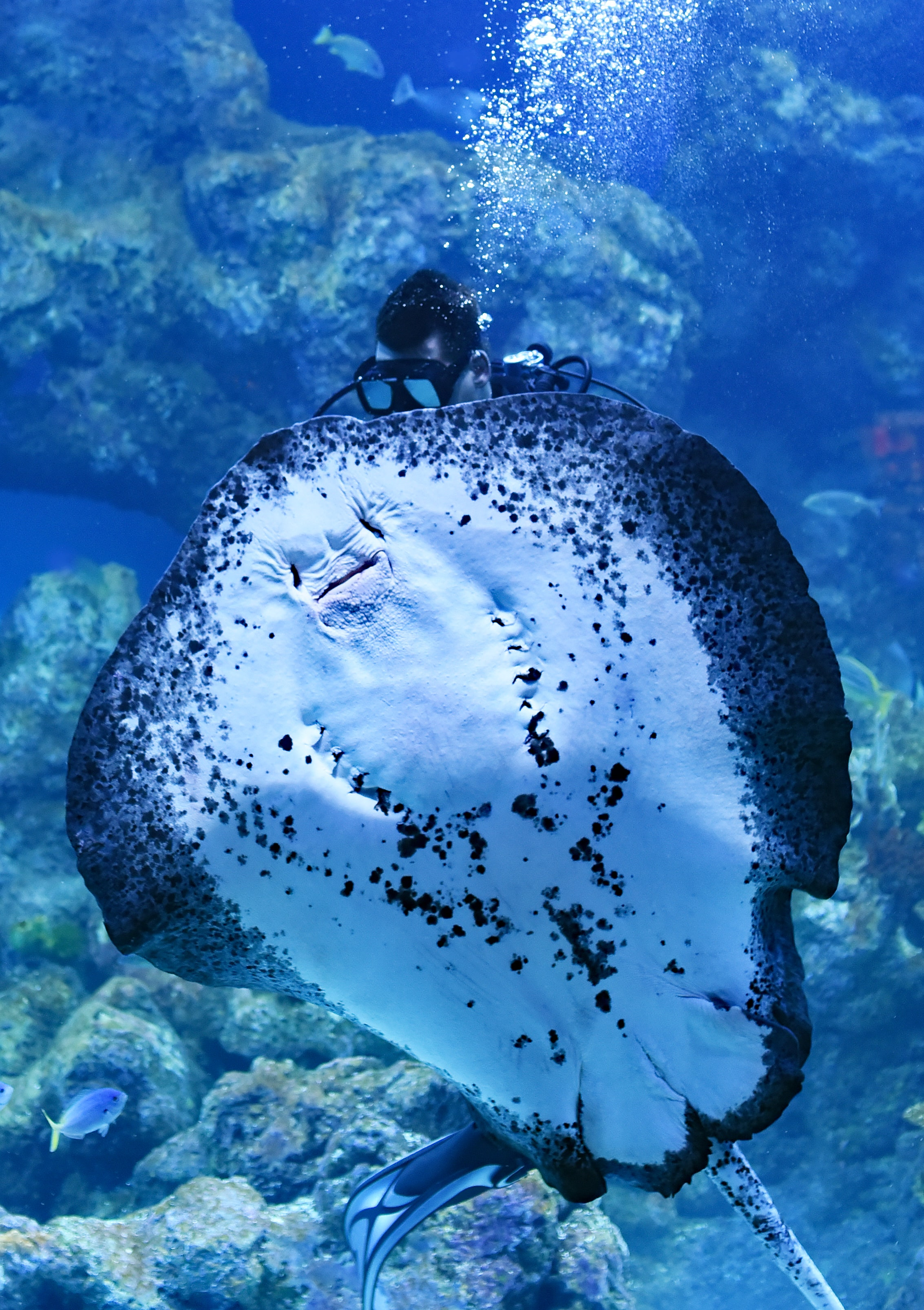 person swimming on top of Manta Ray fish