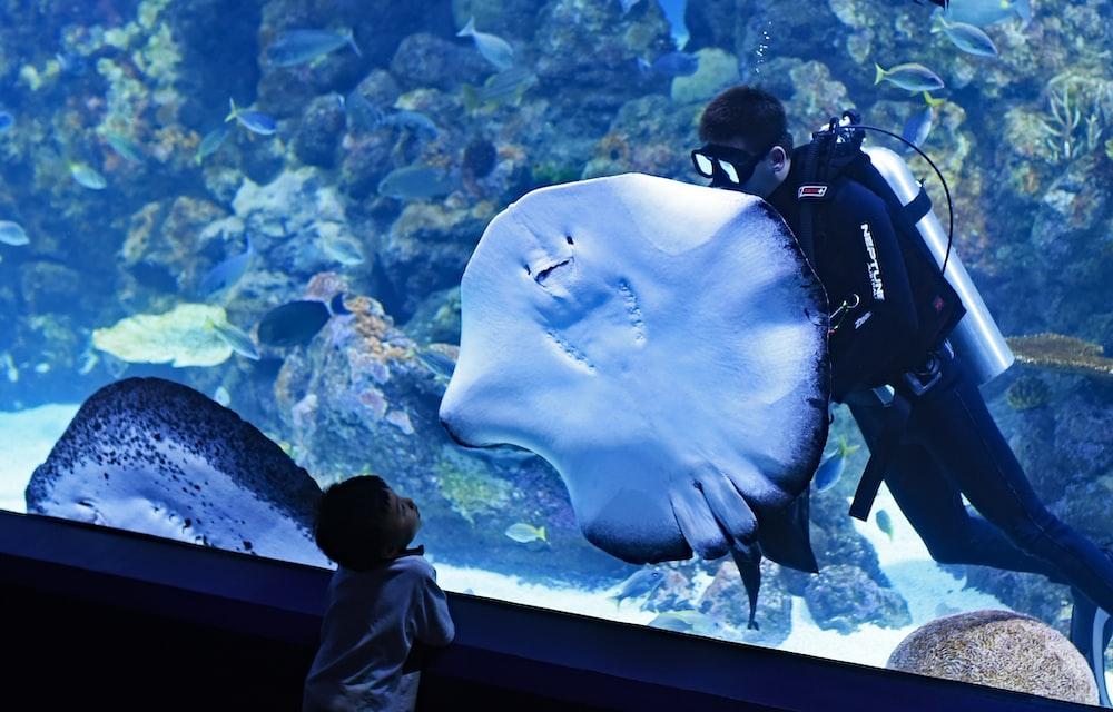toddler boy watching diver swimming beside stingray inside aquarium
