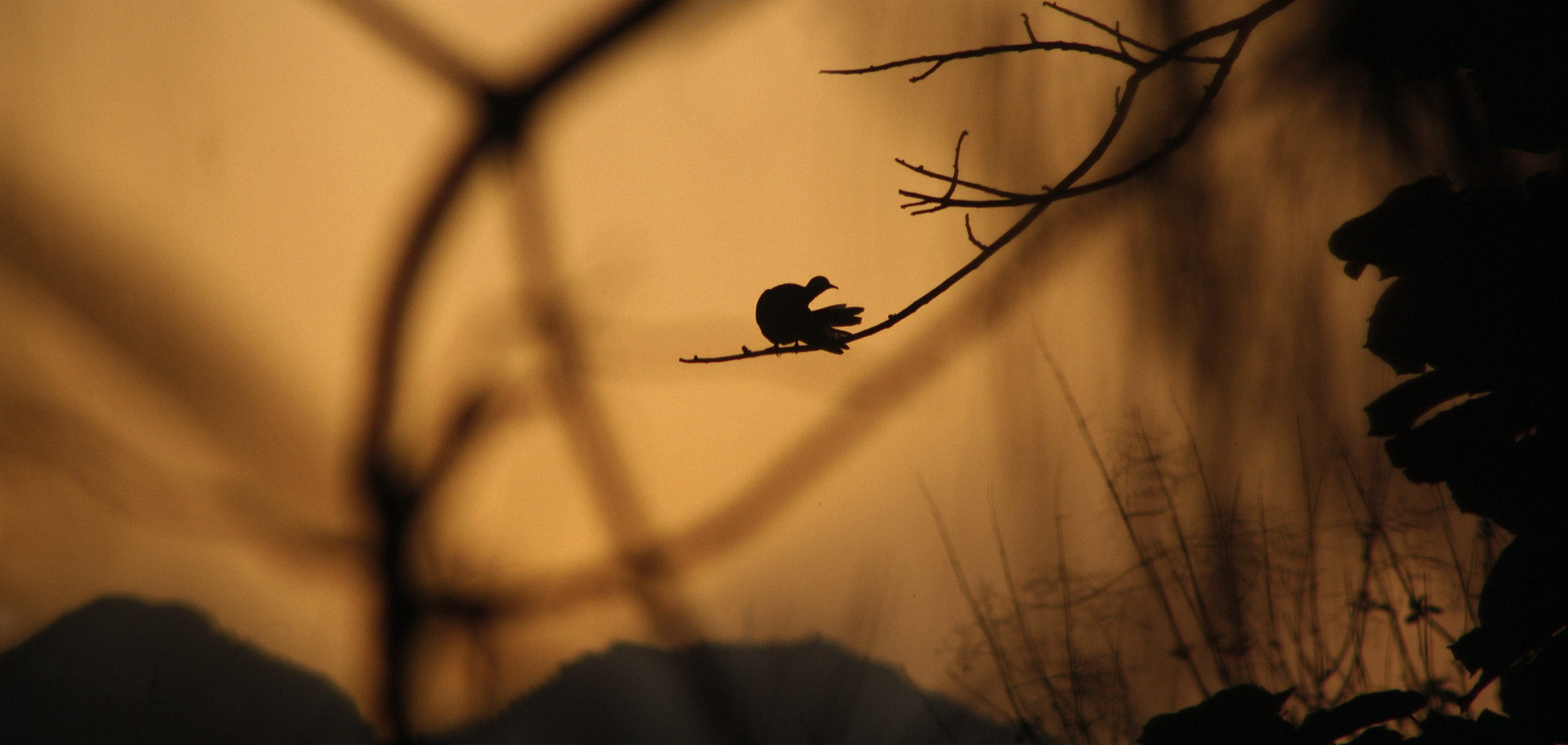 bird perched on tree branch during golden hour