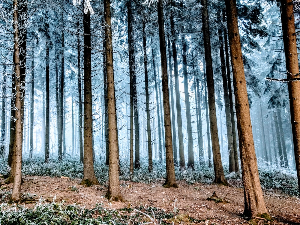 low angle photo of forest