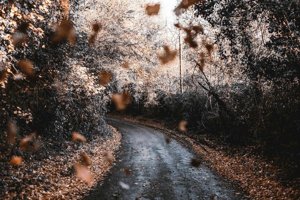 falling dried leaves