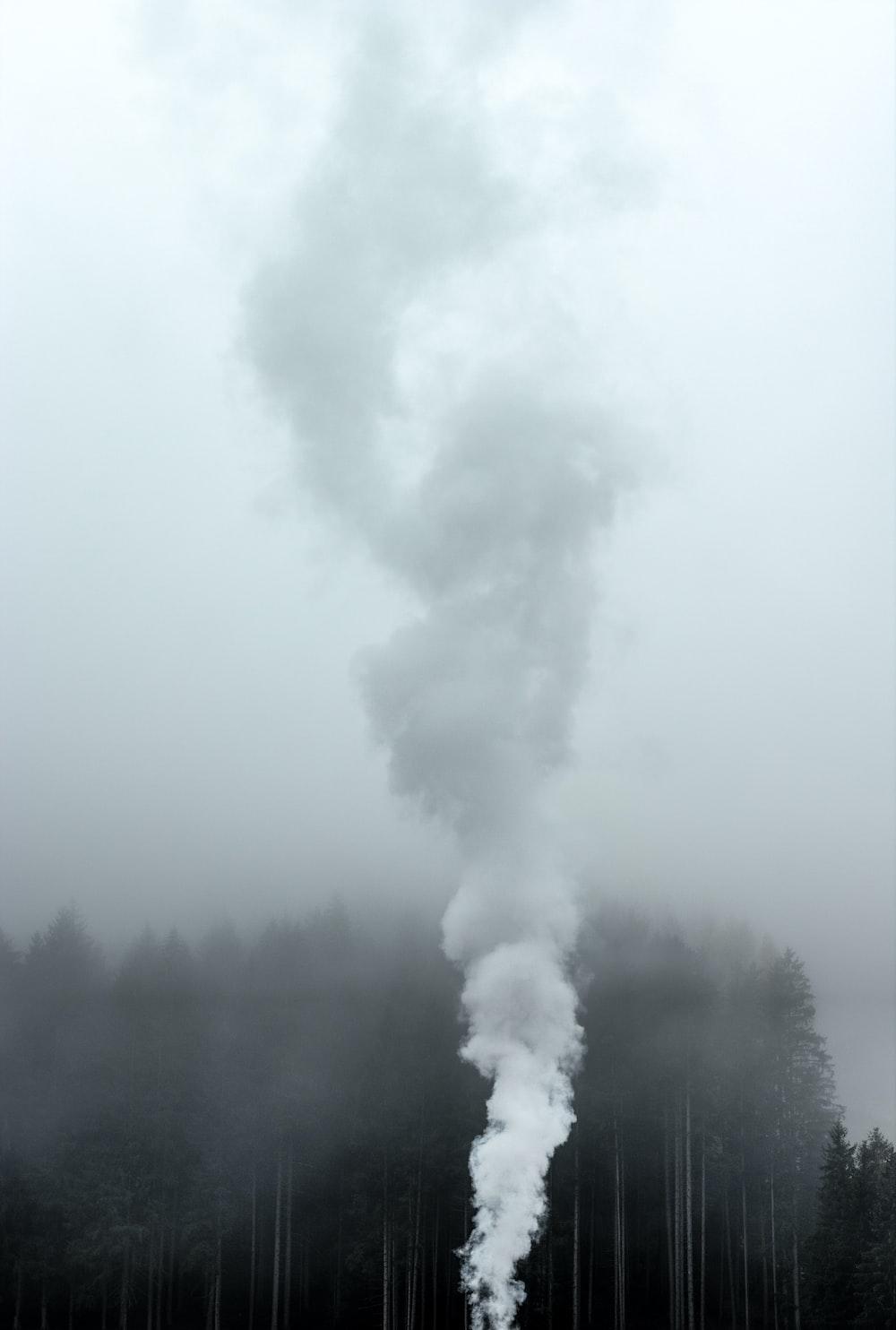 smoke near trees at daytime