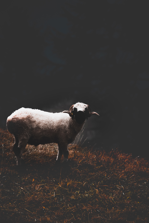 white and brown animal on grassland